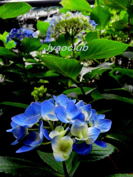 f0195711_811131.jpg