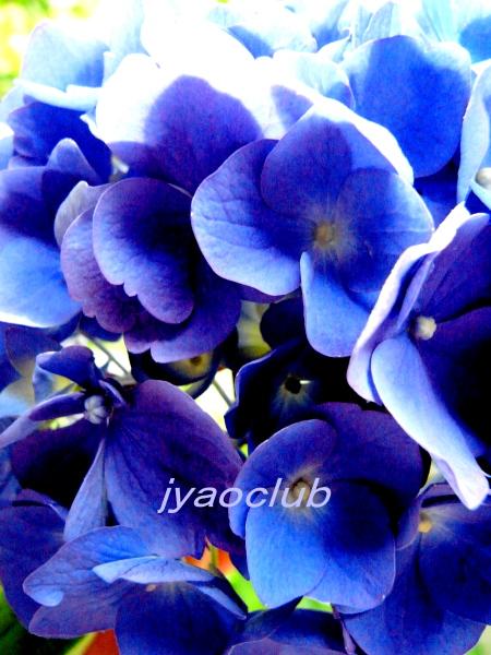 f0195711_8132051.jpg
