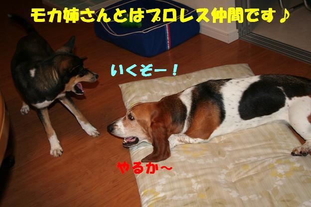 f0121712_23315820.jpg