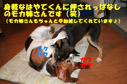 f0121712_23322743.jpg