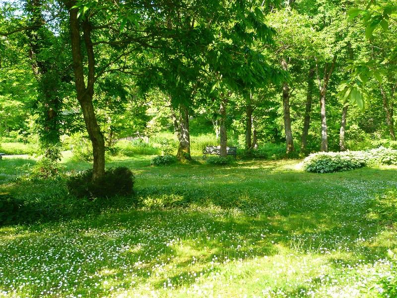 癒しの森へ_f0223914_1304144.jpg