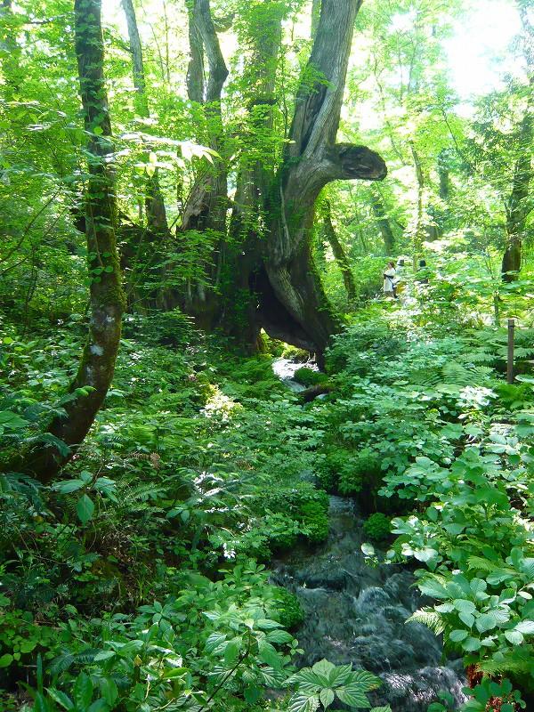 癒しの森へ_f0223914_13181296.jpg