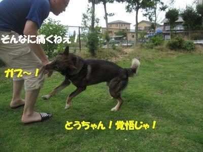 f0143123_2014723.jpg