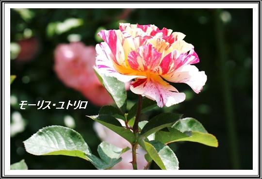 d0043737_12101548.jpg