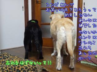 c0218443_1595057.jpg