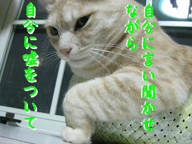 b0151748_14275660.jpg