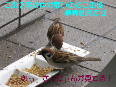 b0158061_2048054.jpg
