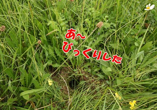 f0068385_3463840.jpg