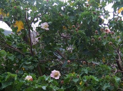 まるで、秋!_e0028387_021208.jpg