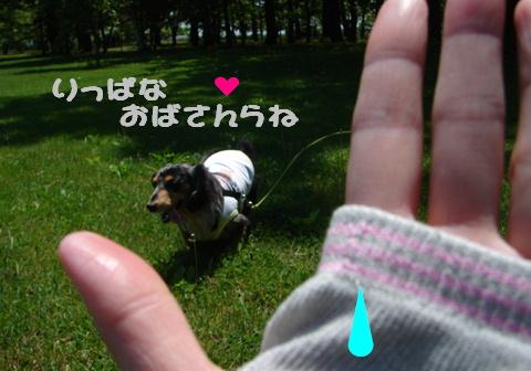 やっと夏かな?_f0195891_215969.jpg