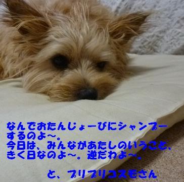 a0154801_18472948.jpg