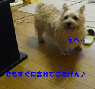a0154801_18475456.jpg