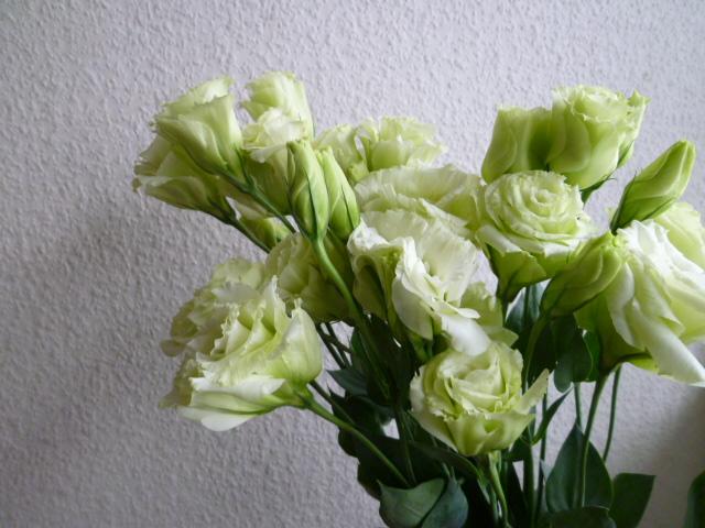 今日来たお花 緑色の花_a0116902_1613845.jpg