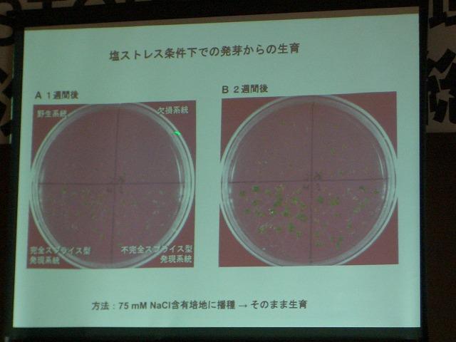 富士市STOP温暖化地域協議会と「遺伝子組換え」_f0141310_2315549.jpg