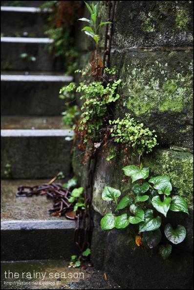 梅雨入り_f0100215_233216.jpg