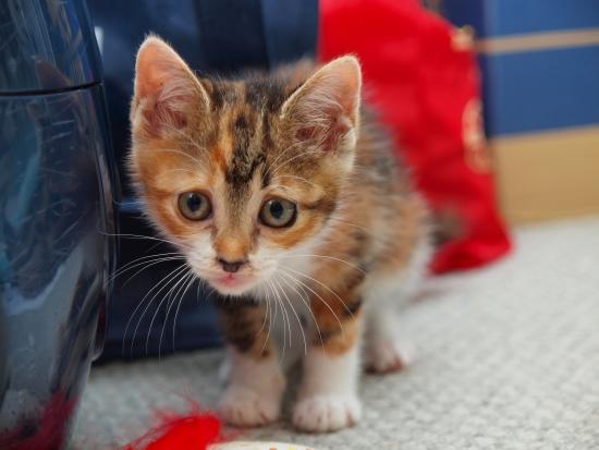 保護子猫経過その6。_c0136217_050332.jpg