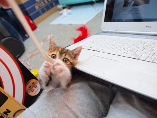 保護子猫経過その6。_c0136217_0503857.jpg