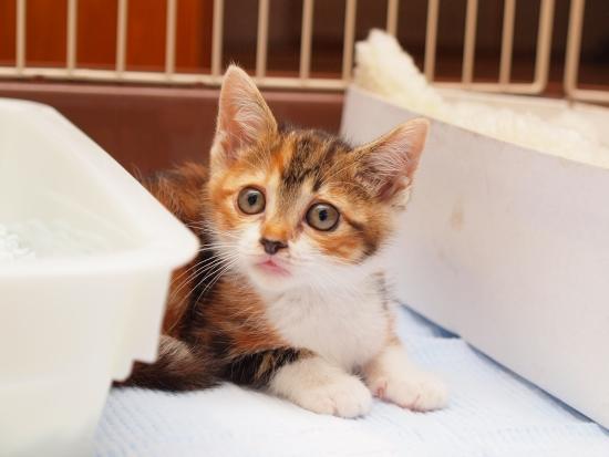 保護子猫経過その6。_c0136217_0505291.jpg