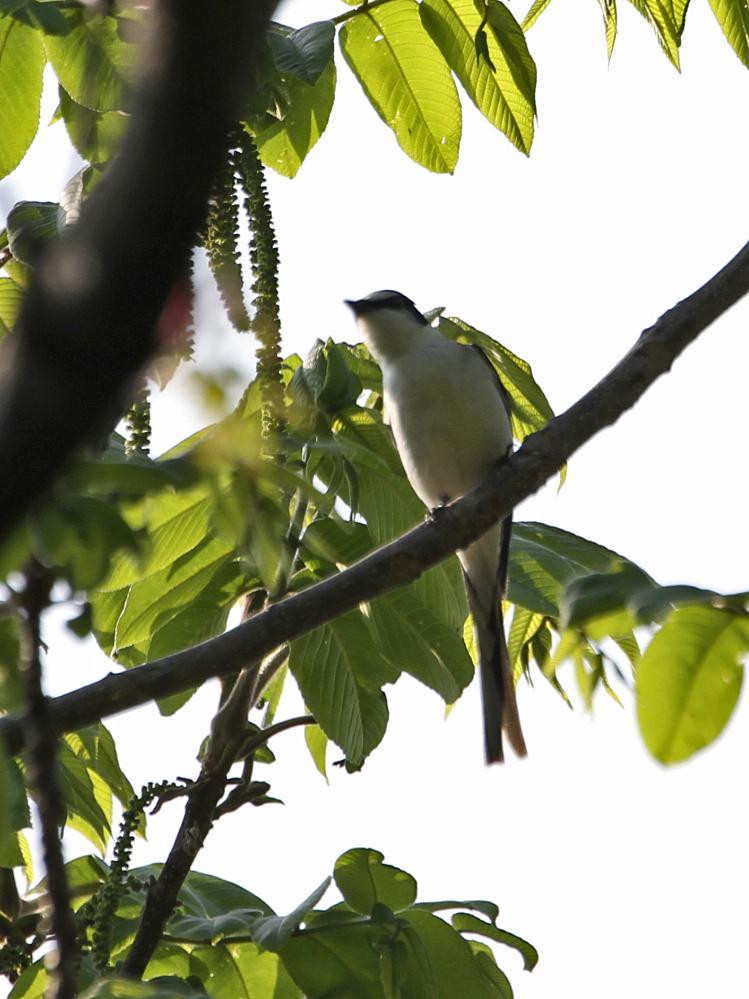 遠征で出会った小鳥さん Ⅱ_c0018118_23535794.jpg