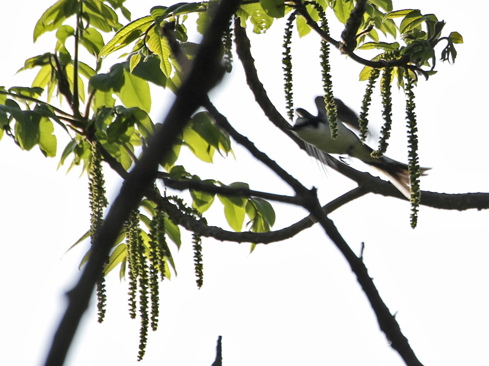 遠征で出会った小鳥さん Ⅱ_c0018118_23542350.jpg