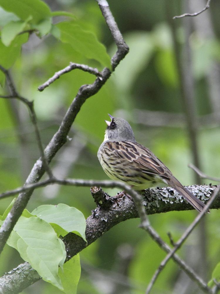 遠征で出会った小鳥さん Ⅱ_c0018118_23552717.jpg