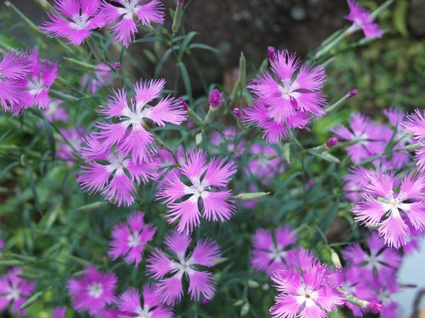 Purple Flowers_f0137626_21192953.jpg