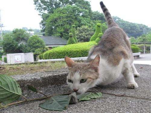 猫にまたたび_f0214527_21204957.jpg