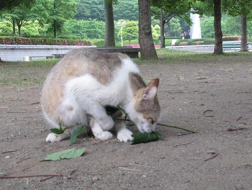 猫にまたたび_f0214527_219186.jpg