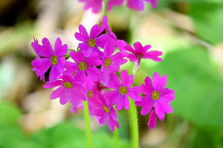 湿原の花と鳥  6月14日_f0113639_19185599.jpg