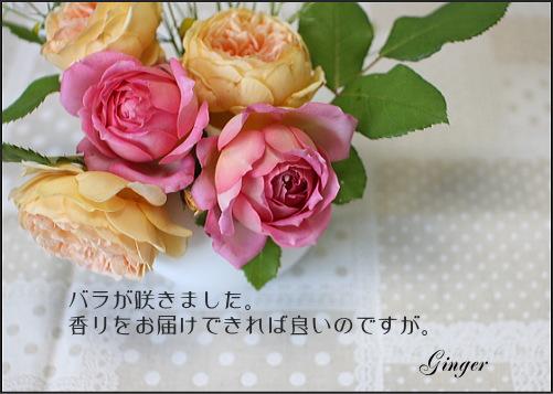 b0066947_21555815.jpg