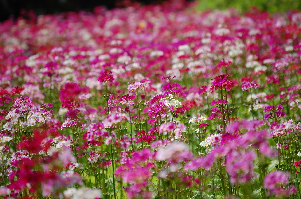 お花畑で出会っ可愛い子ちゃん_d0172270_16385637.jpg