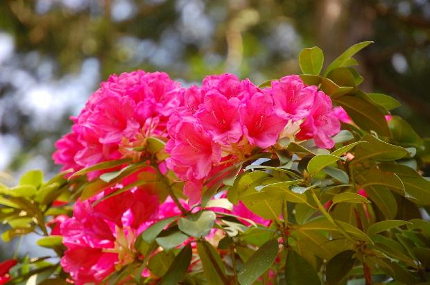 お花畑で出会っ可愛い子ちゃん_d0172270_16421223.jpg