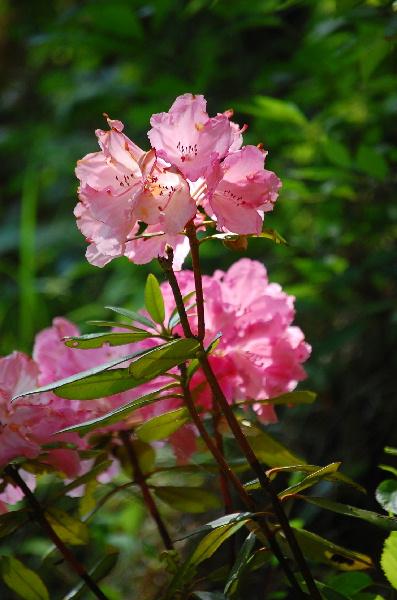 お花畑で出会っ可愛い子ちゃん_d0172270_16453143.jpg