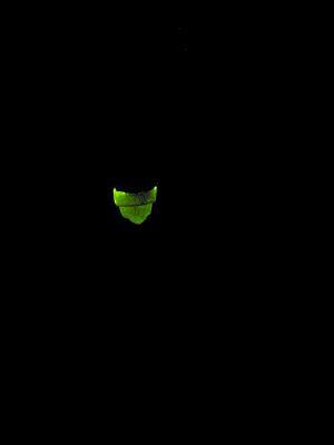 """清流に舞う""""緑夜光""""・・・ゲンジホタル_c0001578_033264.jpg"""