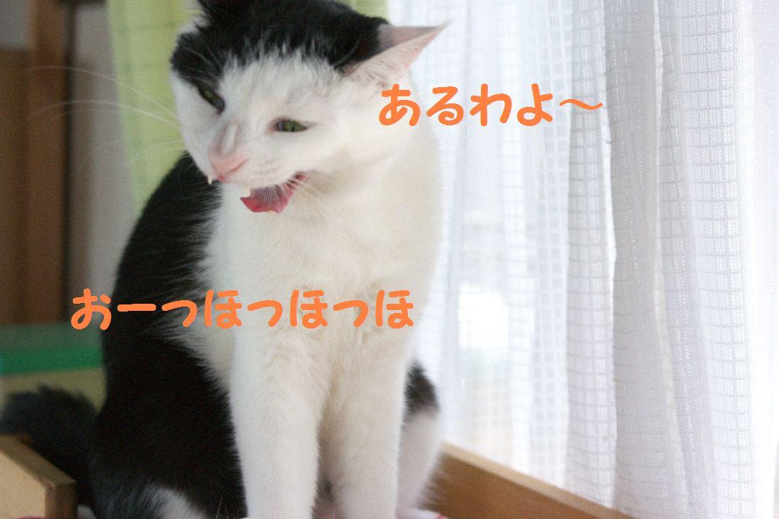 f0197682_22241637.jpg