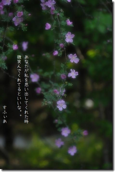 b0152416_16125987.jpg