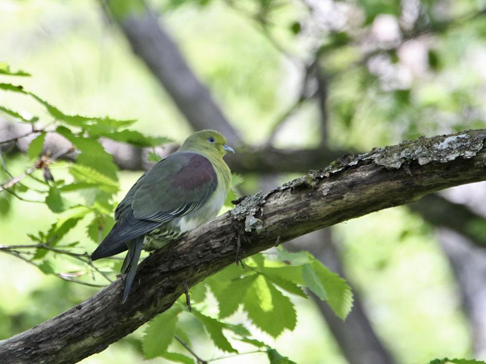 遠征で出会った小鳥さん Ⅲ_c0018118_22373018.jpg