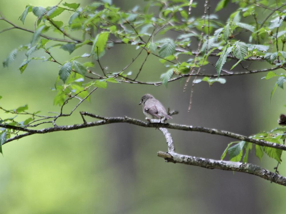 遠征で出会った小鳥さん Ⅲ_c0018118_22381434.jpg