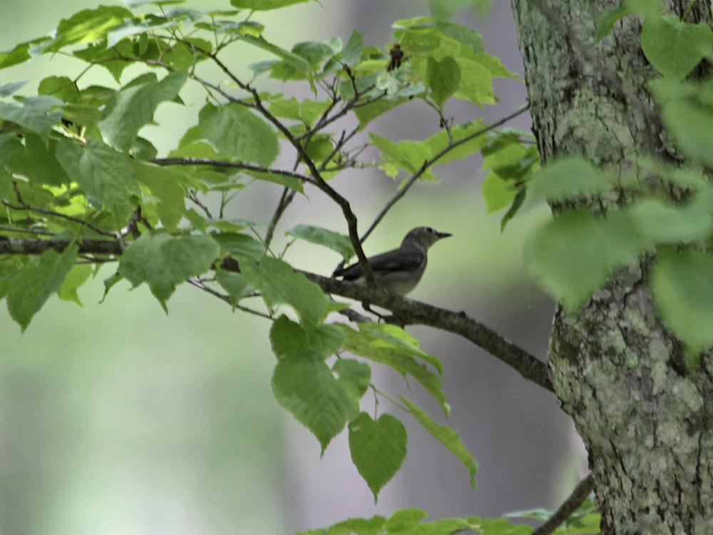 遠征で出会った小鳥さん Ⅲ_c0018118_234257.jpg