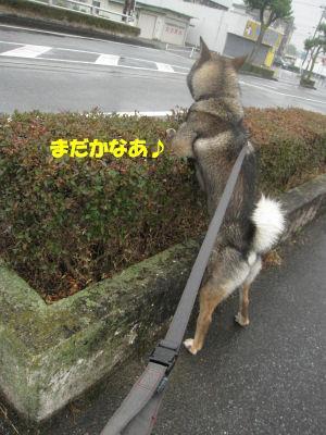 f0143123_20104632.jpg