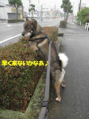 f0143123_20111499.jpg