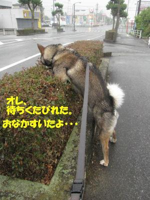 f0143123_20121128.jpg