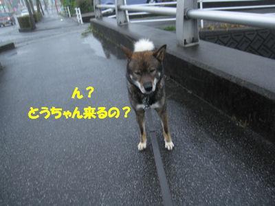 f0143123_208792.jpg