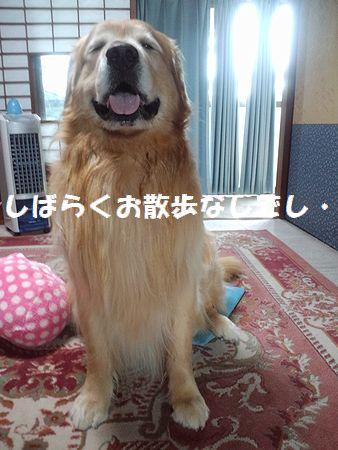 b0127531_1052493.jpg