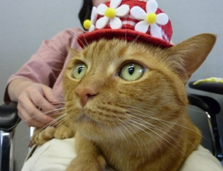 お誕生日猫 しぇる7歳編。_a0143140_215958.jpg