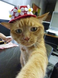 お誕生日猫 しぇる7歳編。_a0143140_2165559.jpg
