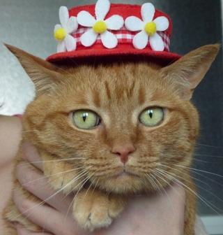 お誕生日猫 しぇる7歳編。_a0143140_2185126.jpg