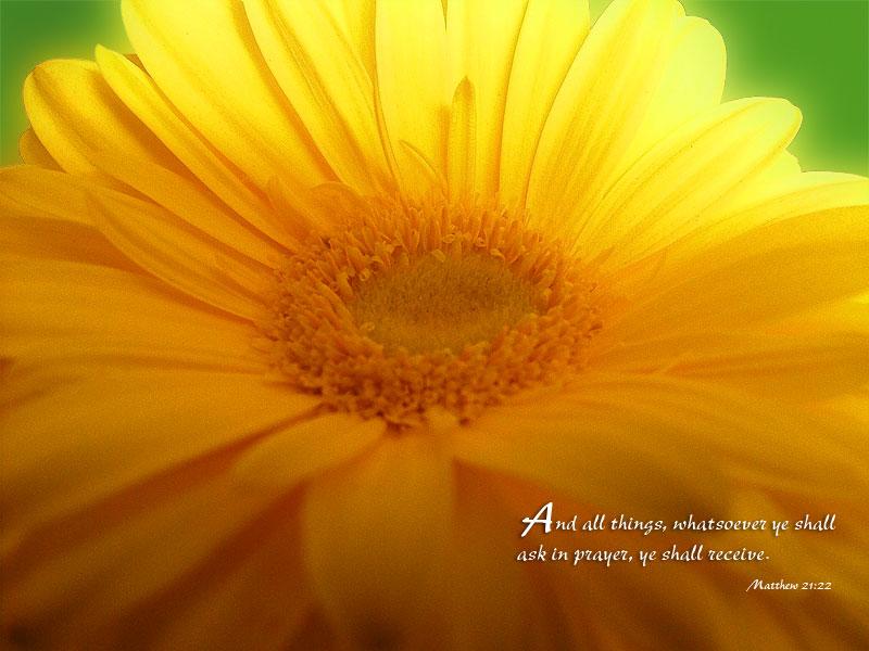 6月15日詩篇46-50篇『感謝のいけにえを主に捧げる』_d0155777_971229.jpg