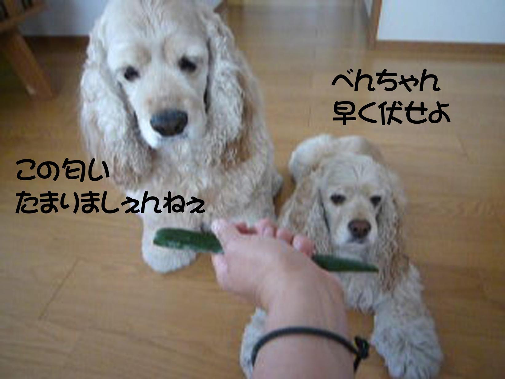 f0218182_092661.jpg