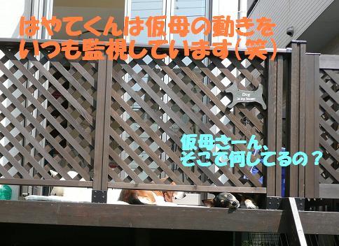 f0121712_8432094.jpg